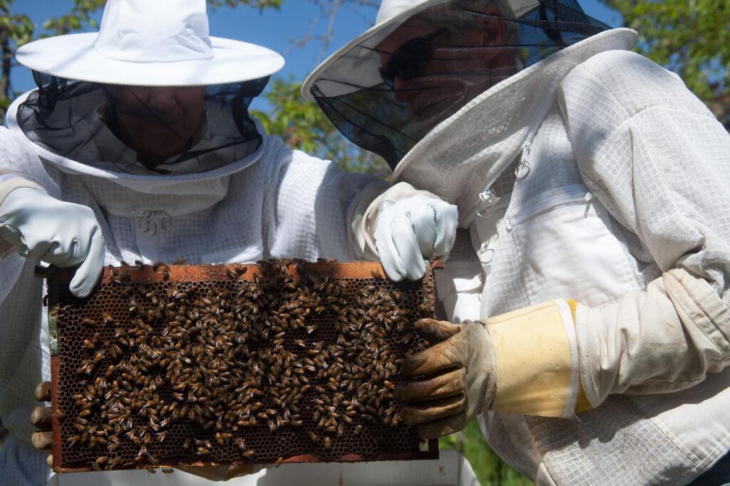 bees_arrivalinspect_keescel